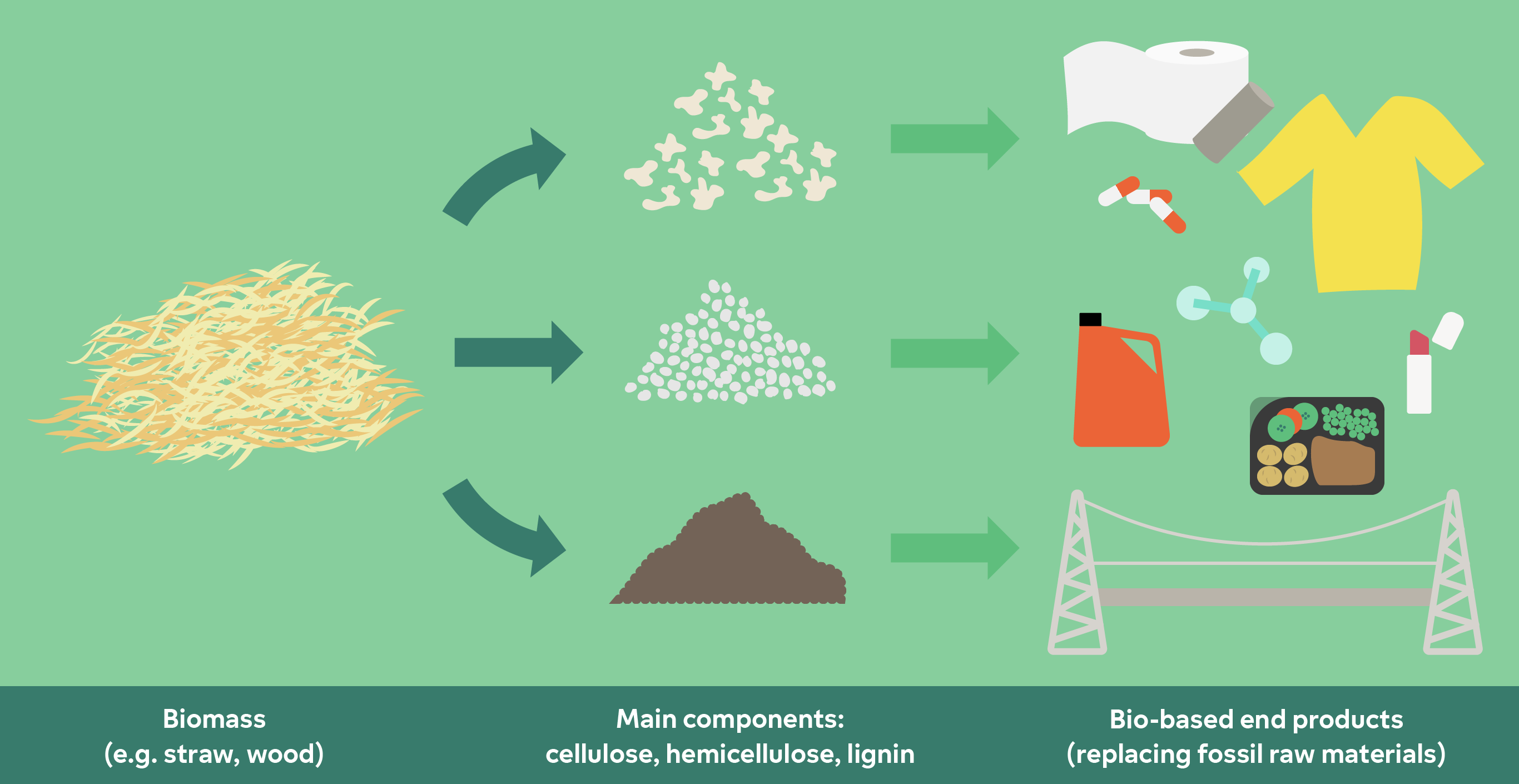 Biomass consists of three main components: cellulose, hemicellulose and lignine. They can be developed to new products.