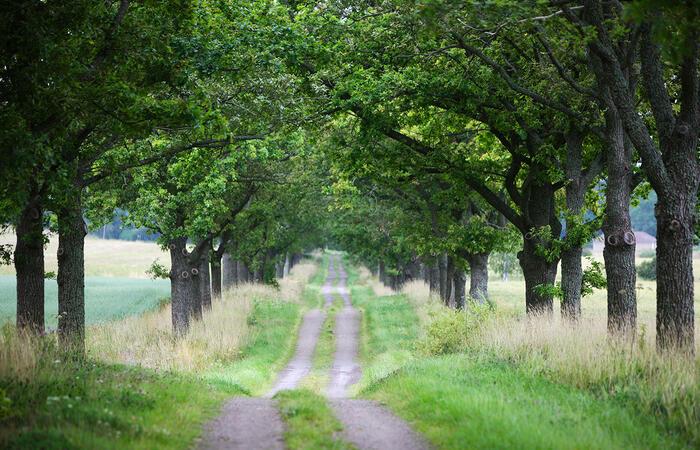 forrest-road